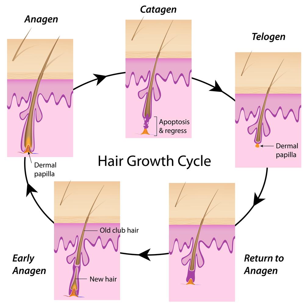 fasi capelli2